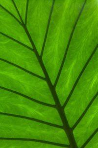 Cuáles son las etapas de la fotosíntesis