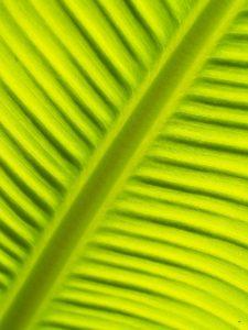 Etapas de la fotosíntesis - Fase lumínica