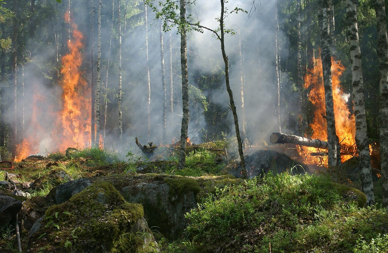 Consecuencias de los incendios - Consecuencias positivas