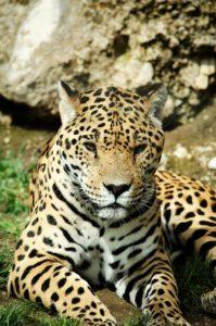 Qué fauna habita en el clima tropical húmedo