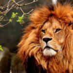 Fauna de Clima Tropical: [Características de Especies Animales]