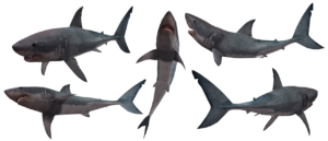 Esqueleto del tiburón