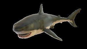 Electrorecepción de los tiburones
