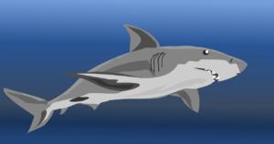 La línea lateral de los tiburones