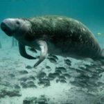 Animales Marinos en Peligro de Extinción: [Causas de Extinción y Características de las Especies]