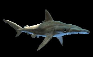 Dónde vivían los tiburones prehistóricos