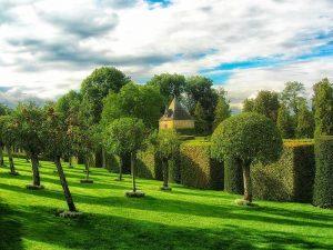 5 plantas y árboles más característicos de Francia - Perigord verde
