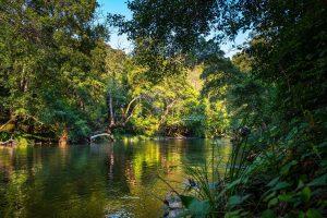 Bosque tropical de inundación