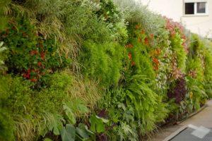 Cómo empezar un jardín vertical - Escogencia del lugar