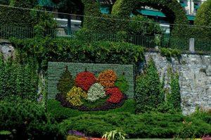 Cómo empezar un jardín vertical - Selección de las plantas