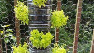 Cómo empezar un jardín vertical - Sistema de riego