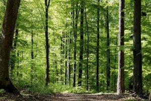 Cómo es el suelo del bosque caducifolio