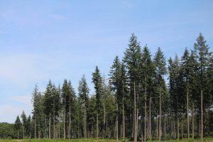 Cómo es el suelo en el bosque boreal