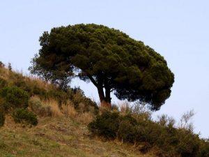 Cómo es el suelo en los bosques perennifolios