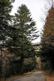 Cómo son las precipitacionesen los bosques perennifolios