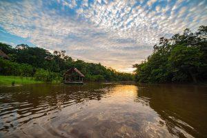 Cuáles son los bosques más grandes del mundo - La selva amazónica