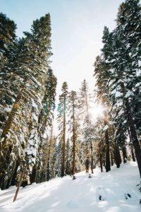 Cuánto duran el día y la noche en el clima hemiboreal