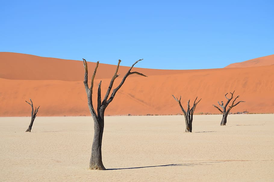 Desiertos áridos