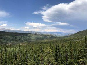 Dónde se ubica el bosque boreal geográficamente
