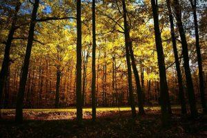Dónde se ubica el bosque caducifolio geográficamente