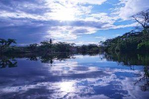 Dónde se ubica el bosque ecuatorial geográficamente