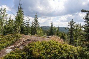 Dónde se ubica el bosque subtropical geográficamente