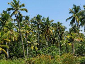 Dónde se ubica el bosque tropical geográficamente