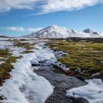 Clima de Tundra: [Características, Flora, Fauna y Adaptabilidad]
