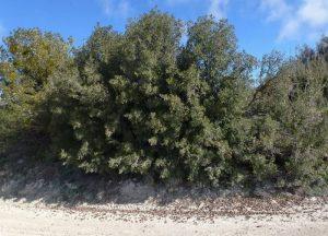 Dónde se ubican los bosques perennifoliosgeográficamente