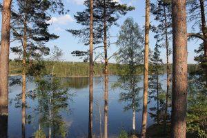 El bosque finlandés en España