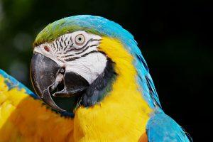 5 animales característicos del bosque tropical - Guacamaya