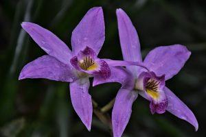 5 plantas y árboles característicos del bosque tropical - Orquídea