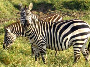 Qué característica tiene la flora y fauna en peligro de extinción