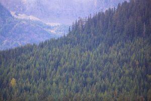 Qué características tiene el bosque boreal