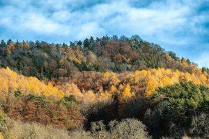 Qué características tiene el bosque caducifolio
