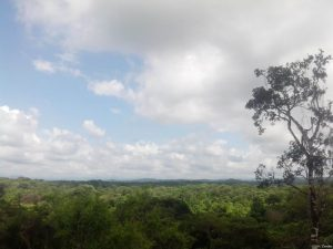 Qué características tiene el bosque ecuatorial