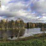 Bosque Finlandés: [Características, Flora, Fauna y Temperatura]