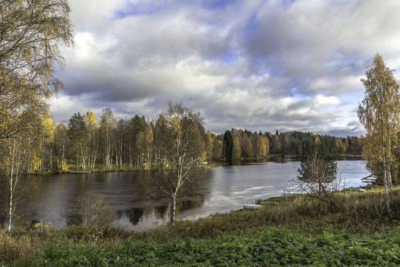Qué características tiene el bosque finlandés