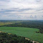 Clima Ecuatorial: [Características, Flora, Fauna y Adaptabilidad]