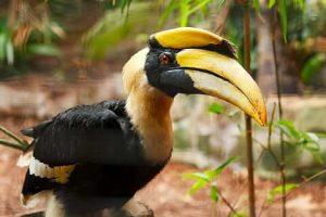 Qué características tiene la flora y fauna del bosque tropical -