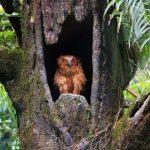Flora y Fauna del Bosque Tropical: [Características y Ejemplos]
