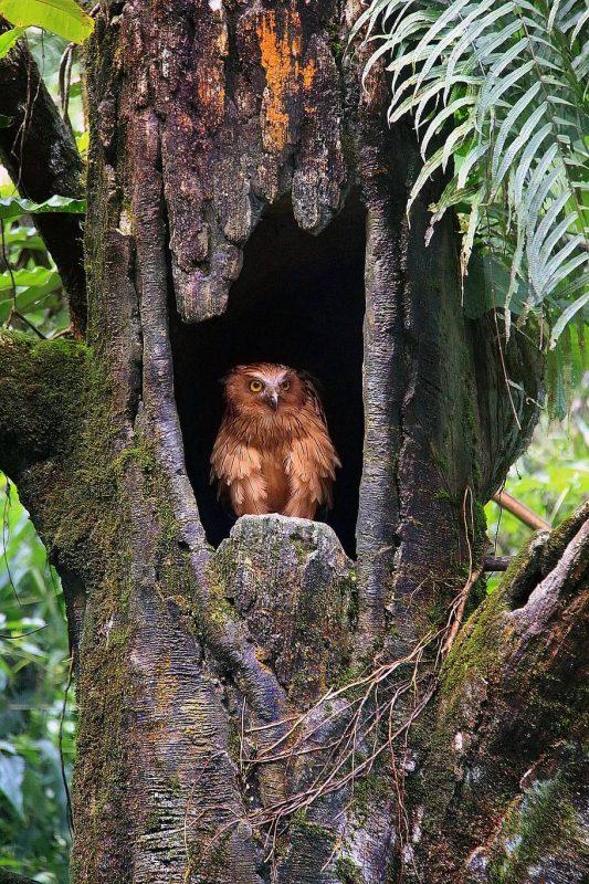 Qué características tiene la flora y fauna del bosque tropical