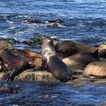 Flora y fauna del Océano Pacífico: [Características y Ejemplos]