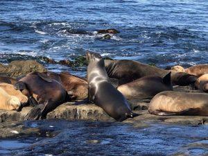 Qué características tiene la flora y fauna del océano Pacífico