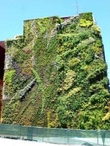 Qué climas son más aptos para desarrollar losjardines verticales