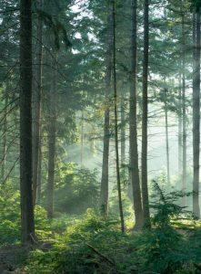 Qué es el bosque de bambú
