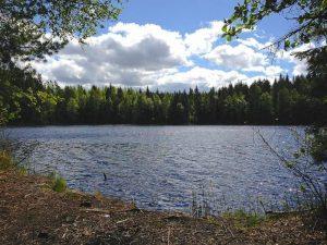 Qué es el bosque finlandés -