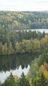 Qué es el bosque finlandés