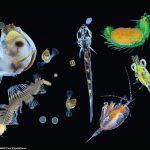 Plancton: [Características, Tipos, Formación e Importancia]