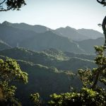 Bosque Tropical: [Características, Flora, Fauna y Temperatura]